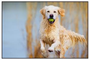 Hond fotoboek