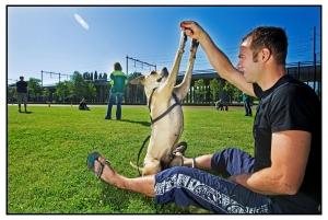 GHVlaardingen Man met hond